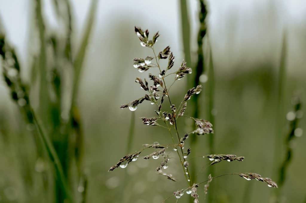 grass, meadow, raindrop-6617371.jpg